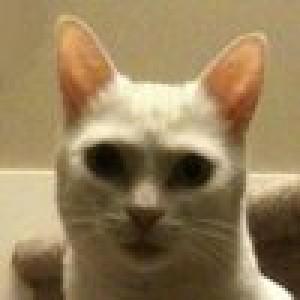 CaptainDaFt's Profile Picture