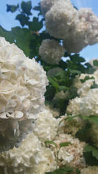 Flower by Annabella016