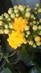 Yellow flower by Annabella016