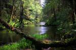 Ward Creek I