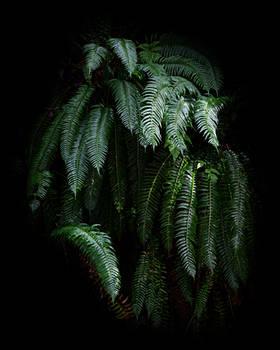 September Ferns 1