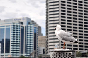 Seagull by taipan-snake
