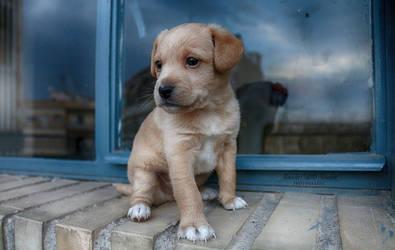 Puppy's view by MercedesCS