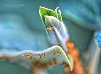 Little bugs by MercedesCS
