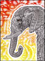 Elephant by Dana-Ulama