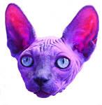 Sphynx Cat Purple Pink Surreal