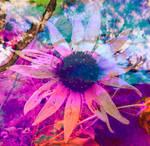 Psychoactive Black-Eyed Susan Print Rainbow Flower