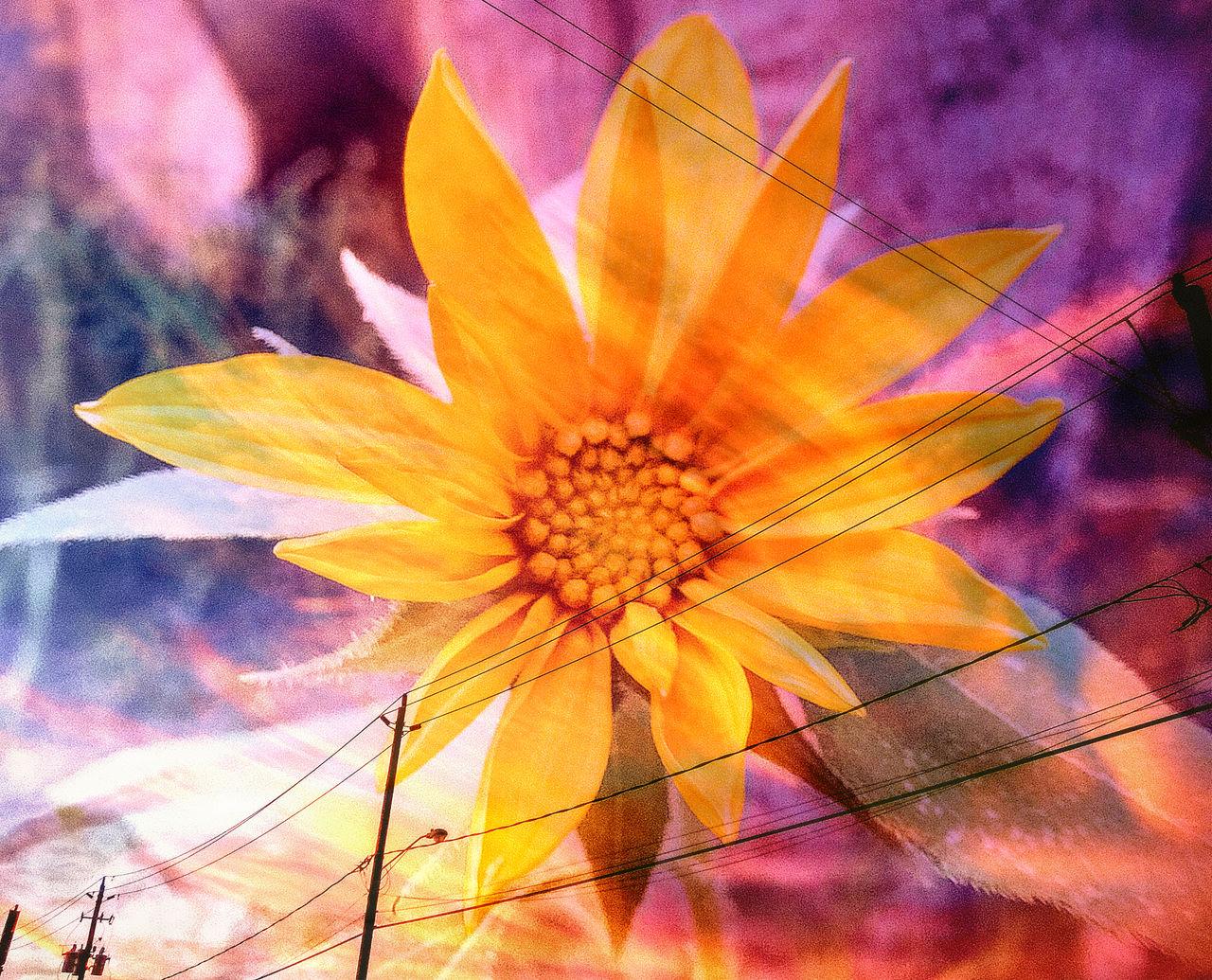 Psychoactive Sunflower Print Rainbow Flower