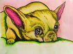 Le Chien The Dog Watercolor Pen Animal