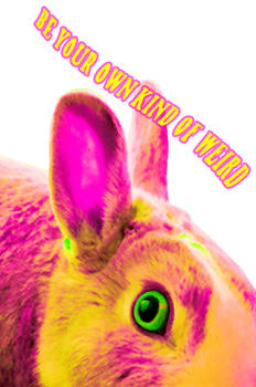 Be Your Own Kind Of Weird Bunny Wall Art