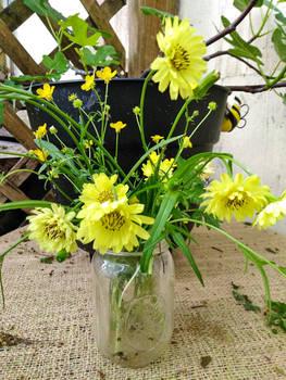 Wild Flower In Vase Texas
