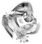 Nasty Pigeons