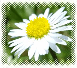 flower  by 420-MUGIWARA
