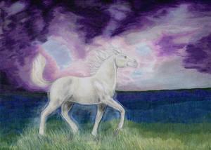 Optimism - Horse