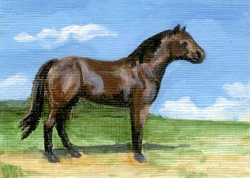 Bay QH ACEO
