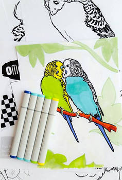 OMG Budgies Colouring Book