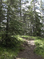 Trail at Bow Falls, Banff by calzephyr