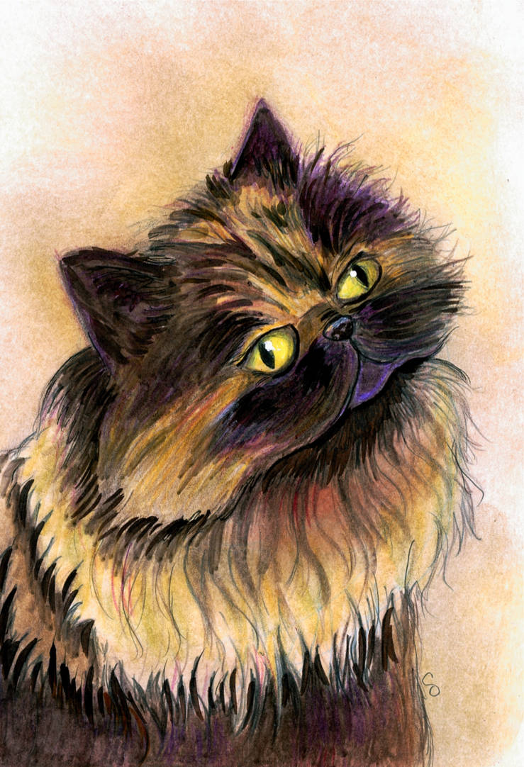 Persian Cat Bernie by calzephyr