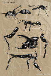 Insect Studies by Lukartoons