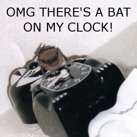 BAT ON MY CLOCK by persephone-the-fish