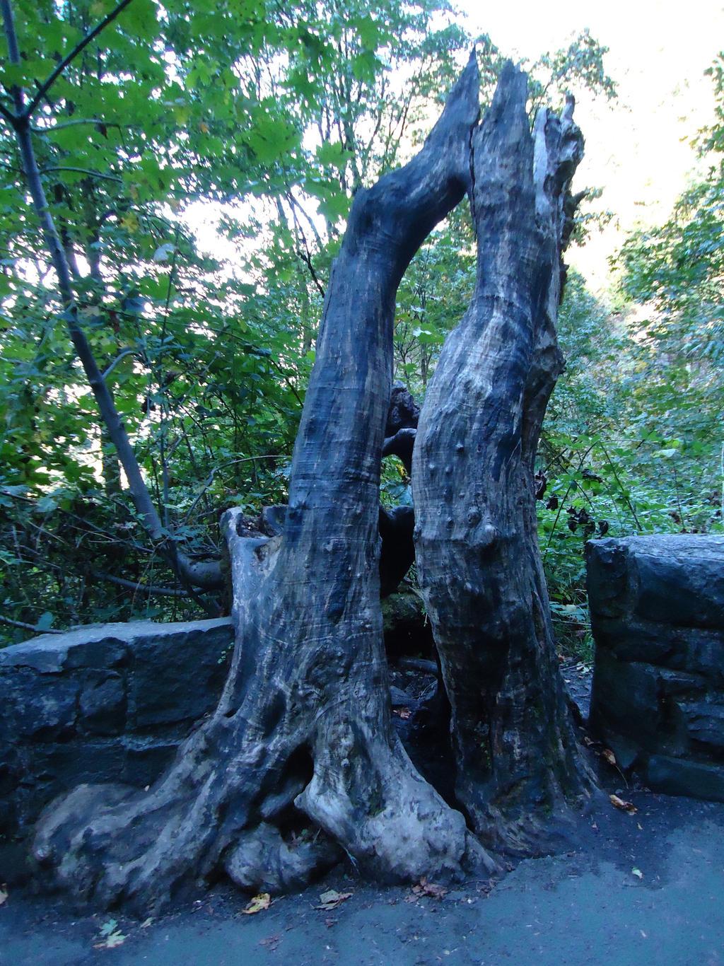Tree Stomp 1