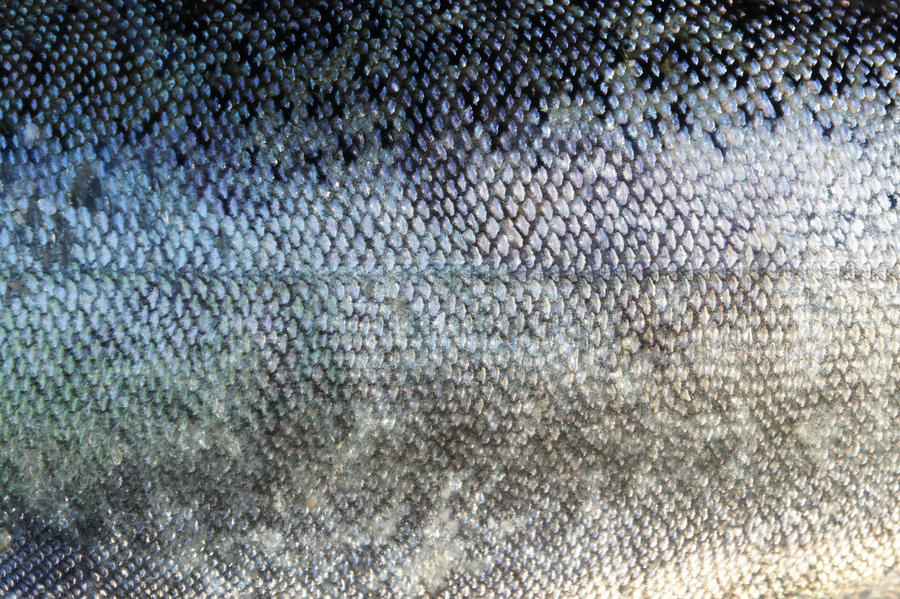 Fish Scales by PikKatze