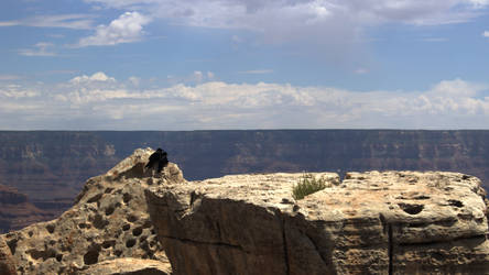 Two Birds at the Grand Canyon by DarkerJ01