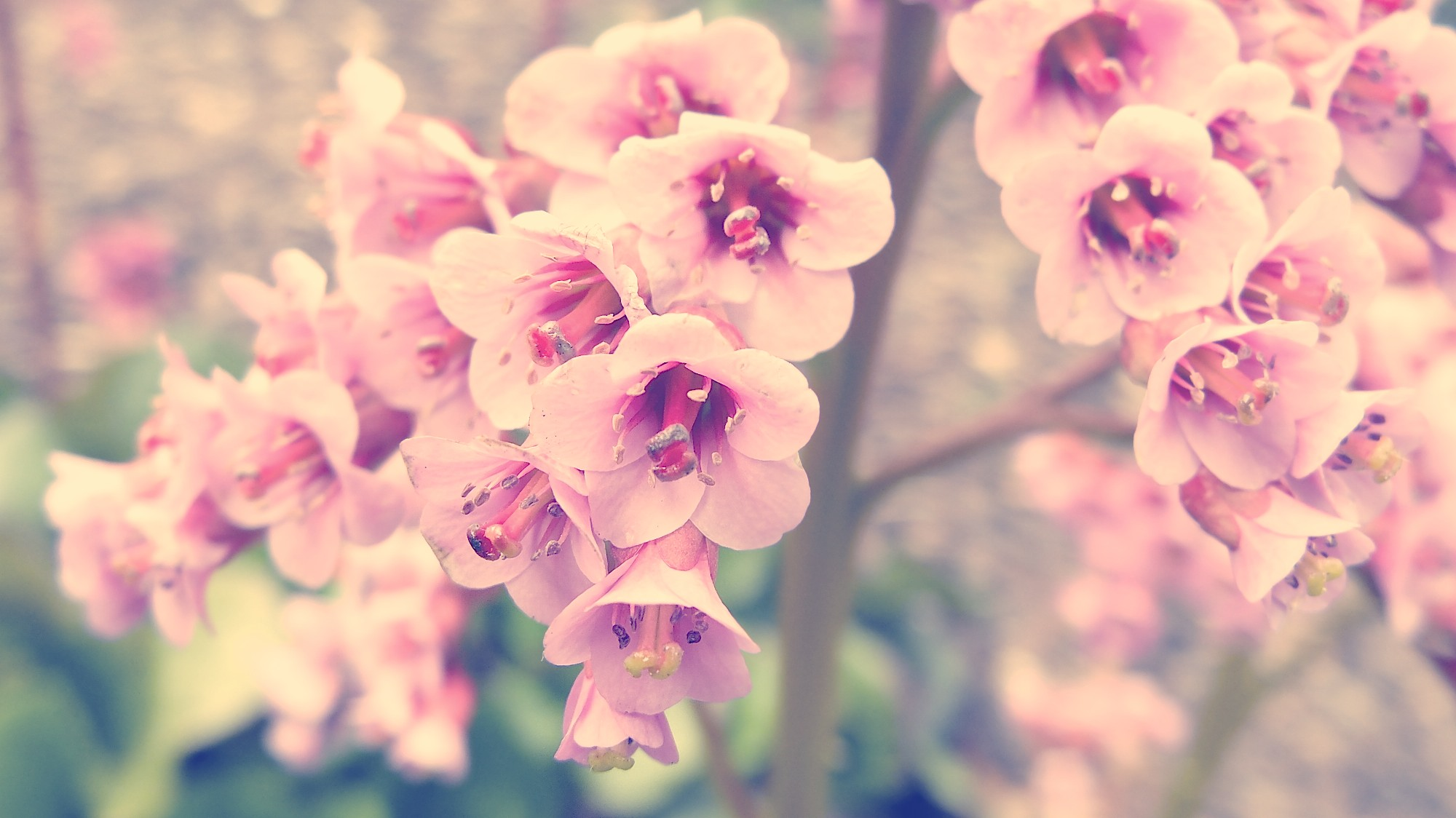 Vintage Flower Photography Backgrounds Untitled By Mouseleaf Dnjk