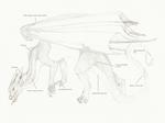 European dragon antomy SKIN