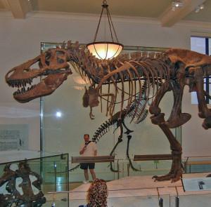 Megalosaurid's Profile Picture