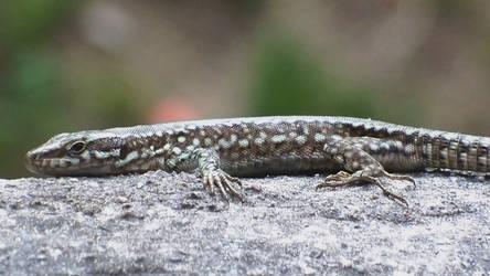 Lizard 4 by BK-81