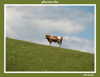 Mountain Cow by zigam