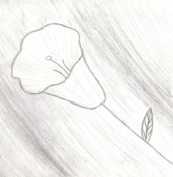 Pretty Flower Drawing By Anime Butterfly