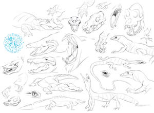 Reptile sketches