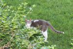 The elusive 3 legged cat (2)