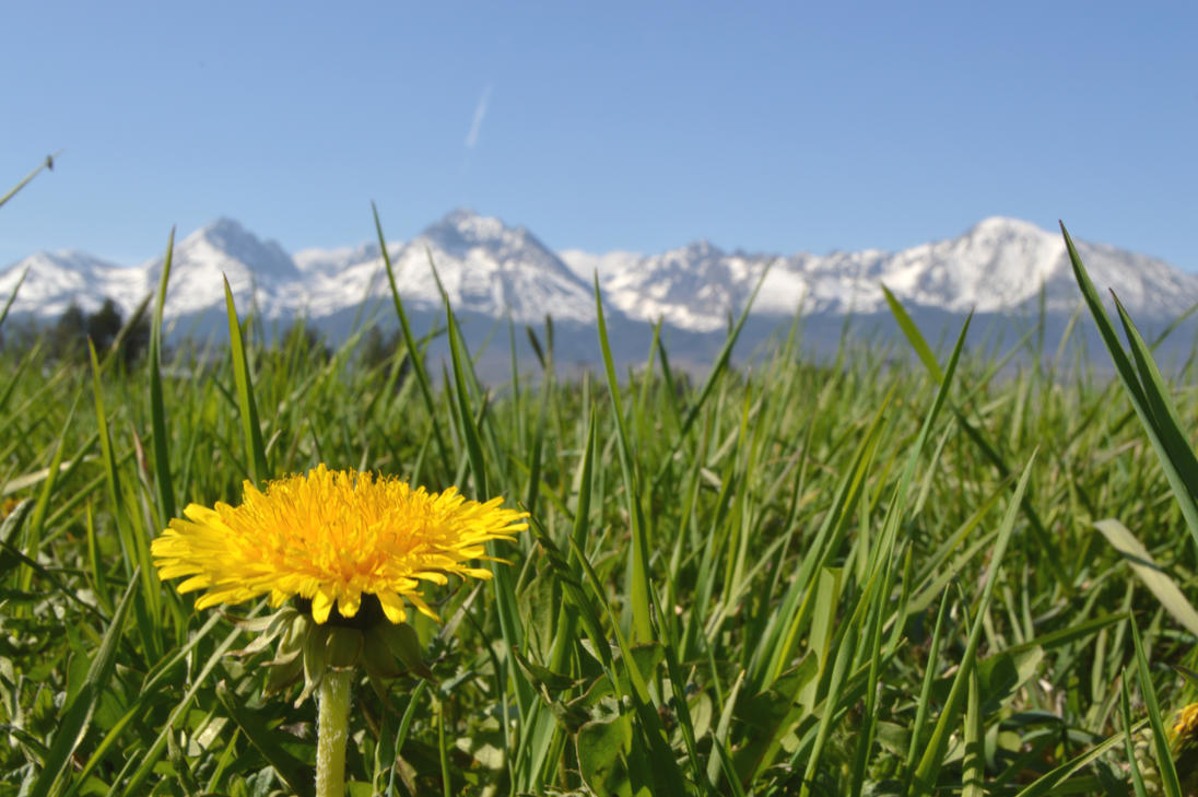 Dandelion and High Tatras by Chrumka02