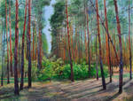 Glade in a pine forest
