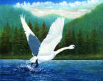Swan Takeoff by DouglasCastleman