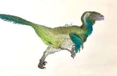 Ostrom Deinonychus in 2020