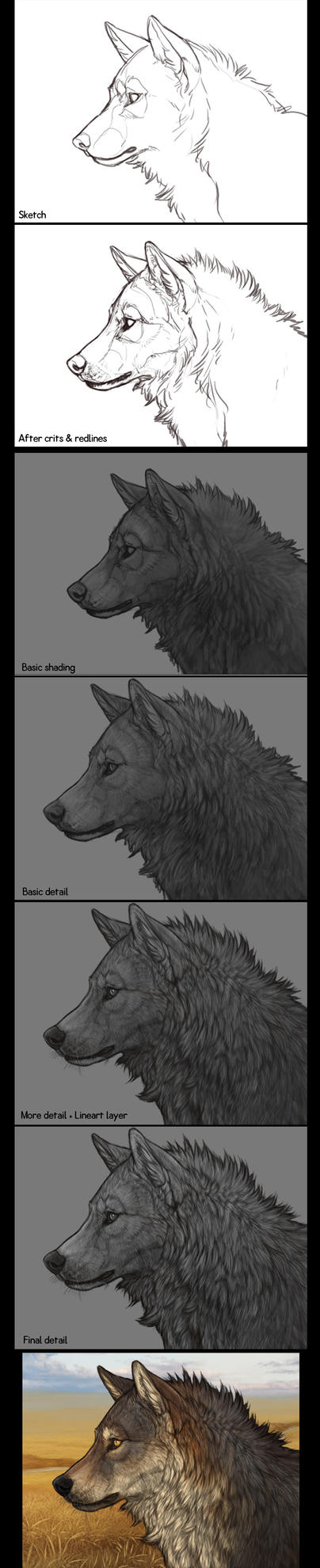 Wolf Practice - Step by Step by mrXylax