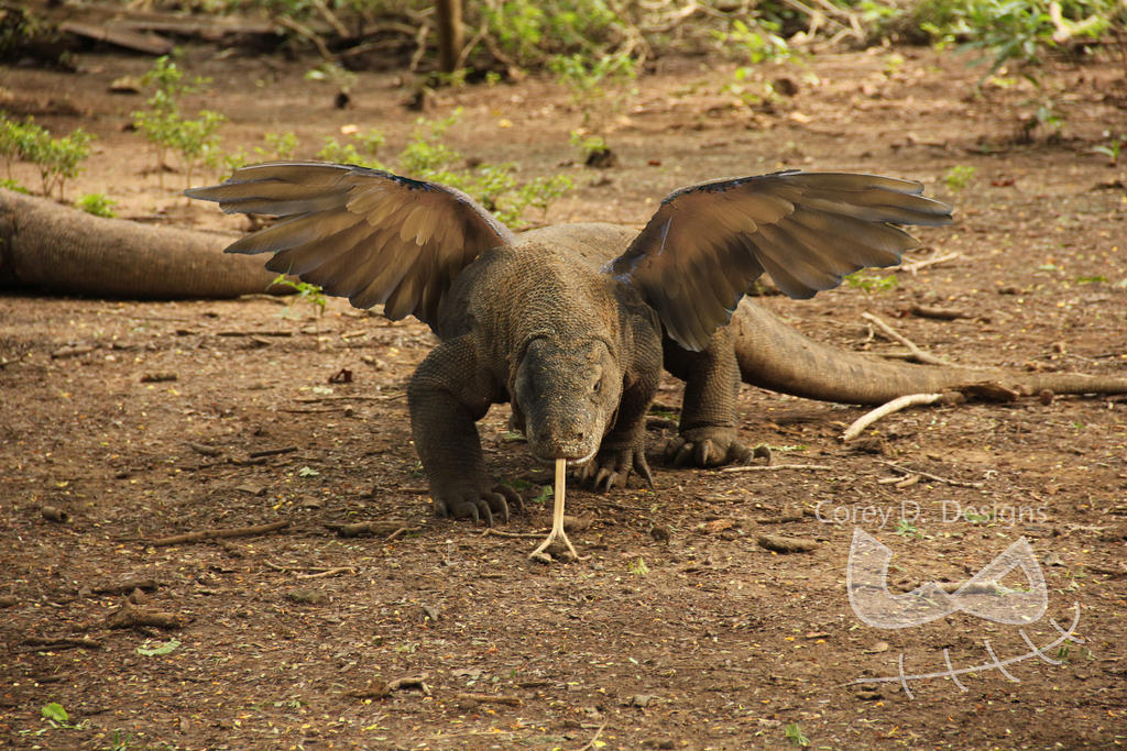 Komodo Dragon X Macaw Animal Morph by CoreyDixon on DeviantArt