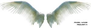 HQ Angel Wings Render