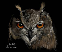 Eurasian Eagle-Owl by ISHAWEE