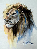 African lion by ISHAWEE