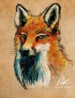 Red Fox by ISHAWEE