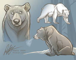 Bear Study by ISHAWEE