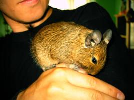 My little Mice by bartoszf