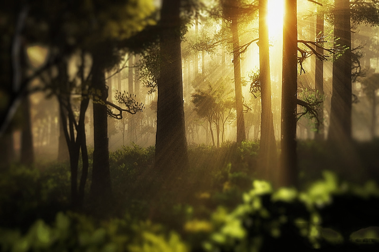 I dream by pixel4life
