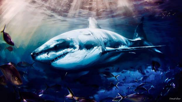 -Shark-