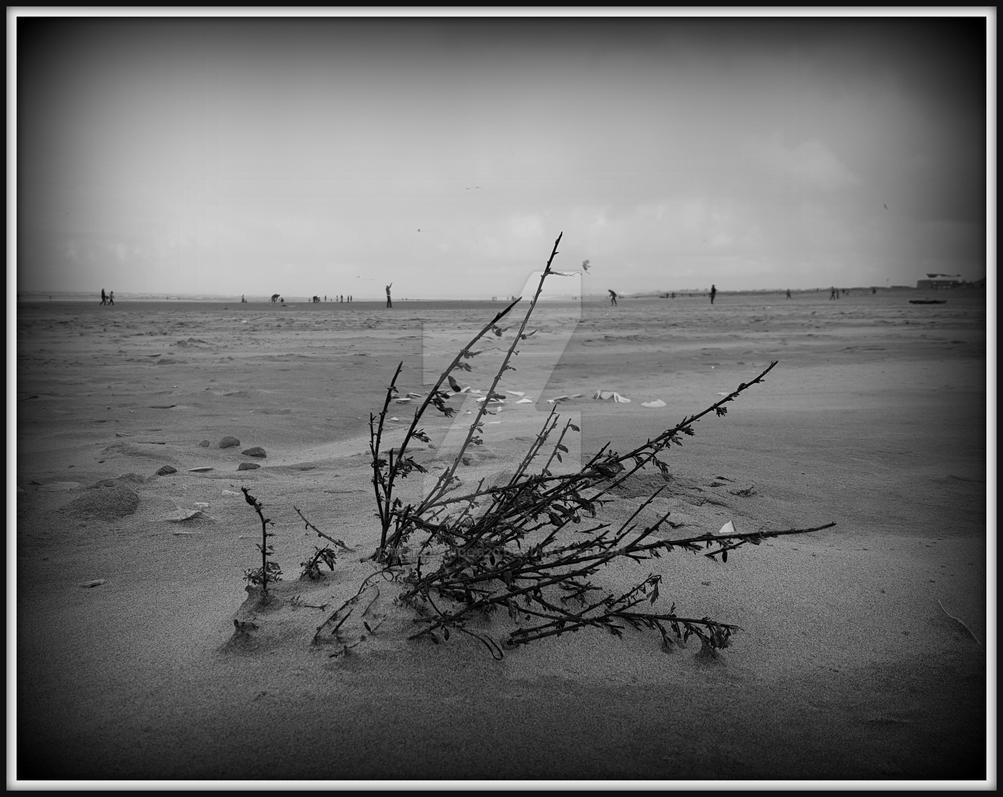 Wind Blown by Mstrlando620